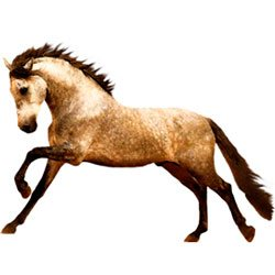 Hesten - Udstyr til hest
